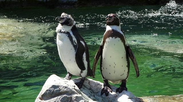 zoo-schonbrunn-1735548_640