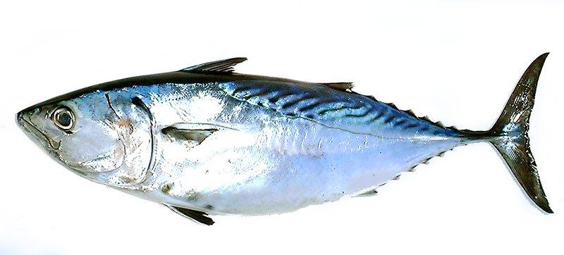 参考:WEB魚図鑑