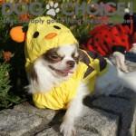 犬の超可愛いレインコートおすすめ人気ランキング!小中大型カッパ/蜂/カエル