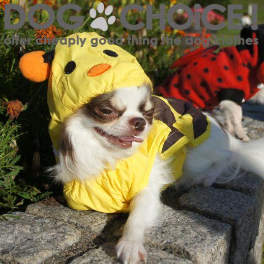 犬可愛い蜂レインコート